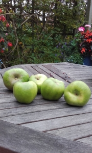 Lord Derby apples from my allotment tree